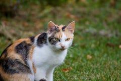 猫面孔细节  免版税库存照片