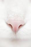猫面对白色 图库摄影