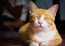 猫面带笑容 免版税图库摄影