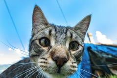 猫顶头特写镜头 免版税库存图片