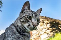 猫顶头特写镜头 库存照片
