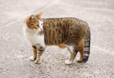 猫顶头房子 免版税库存图片