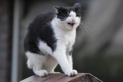 猫顶头房子 图库摄影