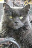 猫顶头房子 库存照片