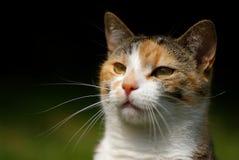 猫题头 免版税图库摄影