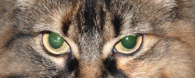 猫题头 免版税库存照片