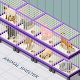 猫风雨棚等量背景 免版税库存照片