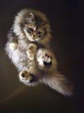 猫飞行 免版税库存照片