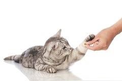 猫食失控 免版税库存照片