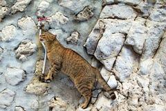 猫饮用水 免版税图库摄影