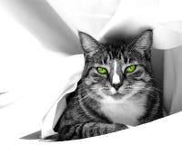 猫魅力 免版税库存照片