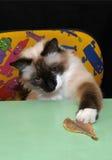 猫鱼使用 库存图片