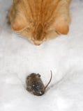 猫鱼鼠标 免版税图库摄影