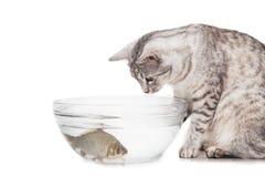 猫鱼水族馆 库存照片