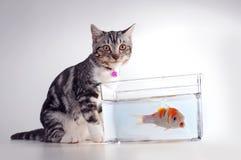 猫鱼 库存图片