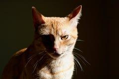 猫黑暗 免版税库存照片