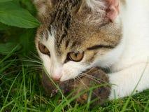 猫鼠标 免版税库存照片