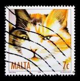 猫龟甲猫属silvestris catus,猫serie,大约2007年 库存图片
