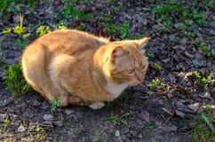 猫,关闭 免版税图库摄影