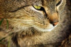 猫,动物 免版税库存图片