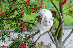 猫,宠物,白色,似猫,逗人喜爱,年轻,动物 图库摄影