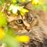猫,走本质上的宠物画象在开花的灌木的在夏天 免版税库存图片