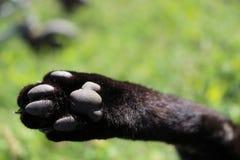 猫,逗人喜爱的猫,猫` s爪子,猫抓 免版税库存照片