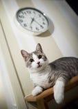 猫-午餐时间(查看照相机)!!! 免版税图库摄影
