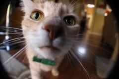 猫鼻子 免版税库存图片
