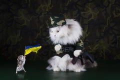 猫给战士穿衣 免版税图库摄影