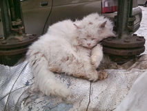 猫-房子的喜爱 免版税库存图片