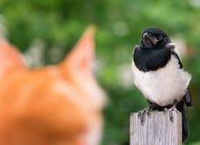猫寻找了一只鸟 库存照片
