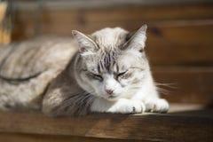 猫/晴朗/愉快的猫/晴天 免版税图库摄影