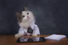 猫经理错过办公室 免版税库存图片