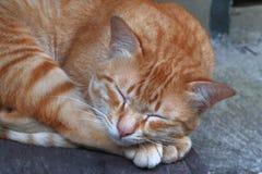 猫黄色睡眠 图库摄影