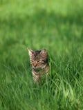 猫以绿色 免版税库存图片