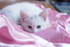 猫画象柔软 免版税库存图片