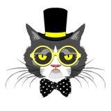 猫画象 免版税库存照片