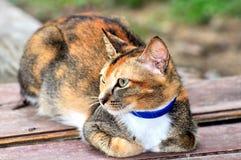 猫画象 免版税库存图片