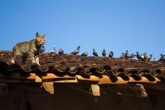 猫&鸟 免版税图库摄影