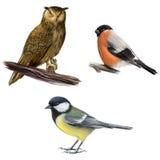 猫头鹰、红腹灰雀和山雀 免版税库存照片
