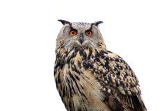 猫头鹰冲击了 免版税图库摄影