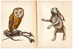 猫头鹰和兔子-手拉的传染媒介 免版税图库摄影