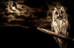 猫头鹰和满月万圣夜摘要 免版税图库摄影