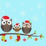 猫头鹰圣诞节家庭  免版税库存图片