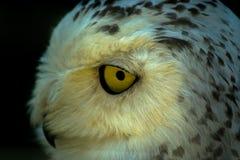 猫头鹰在俄国公园 免版税库存图片