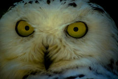 猫头鹰在俄国公园 免版税库存照片