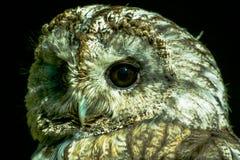 猫头鹰在俄国公园 库存图片