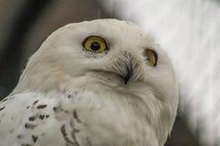 猫头鹰在俄国动物园里 库存照片