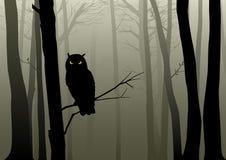 猫头鹰在有薄雾的森林 皇族释放例证